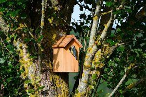 activité nature avec enfants : nichoir à oiseaux